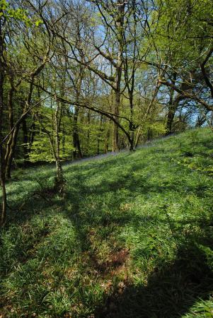 Ashwater, Beaworthy, Devon