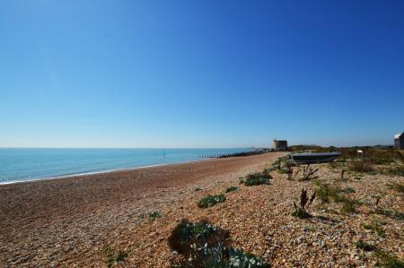 Oyster, Fisherman's Beach, Hythe, Kent